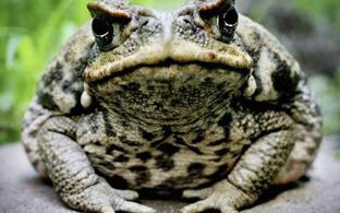 crapaud ou prince charmant