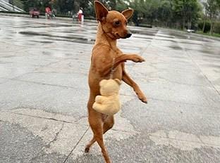 Promener son chien pour faire des rencontres