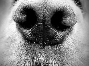 Etre attiré par une personne grâce à son odeur